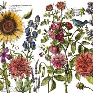 IOD transfer Botanist's Journal