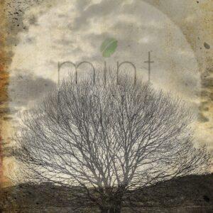 Sepia Tree – papier do decoupage Mint by Michelle